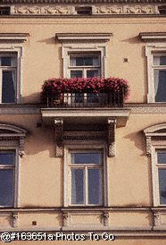 Windows & flower box